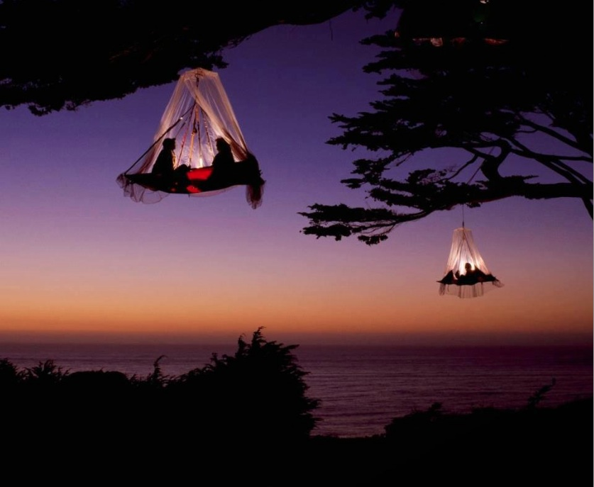 Tree Camping California